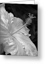 Hibiscus Profile Greeting Card