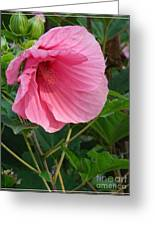 Hibiscus Profile Greeting Card