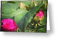 Hibiscus Read To Bloom Greeting Card by Brittany Perez