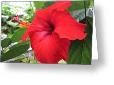 Hibiscus Red Greeting Card