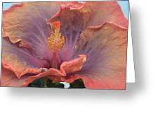 Hibiscus Greeting Card
