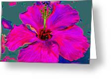 Hibiscus Skies Greeting Card by Rebecca Flaig