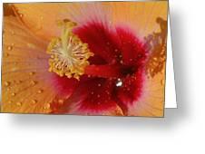 Hibiscus Stamen IIi Greeting Card