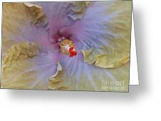 Hibiscus Storm Greeting Card