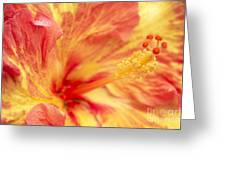 Hibiscus Greeting Card by Tony Cordoza
