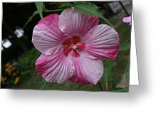 Hibiscus - Turn Of The Century Greeting Card