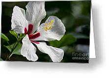 Hibiscus White Wings Greeting Card