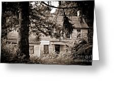 Hidden Behind The Pines Greeting Card by Colleen Kammerer