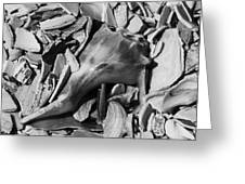 Hidden Conch Greeting Card