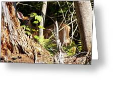 Hidden Fawn Greeting Card