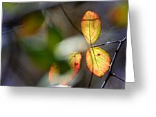 Hidden Forest Leaves Greeting Card