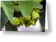 Hidden Fruit Greeting Card