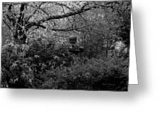 Hidden Garden In Black And White Greeting Card