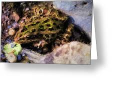Hidden In The Rocks Greeting Card