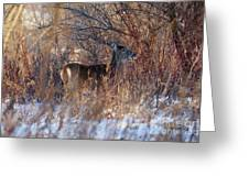 Hidden In The Trees Greeting Card