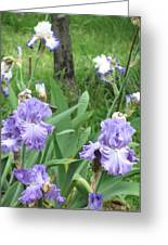 Hidden Iris Greeting Card