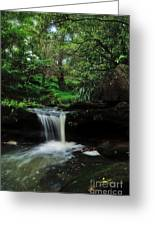 Hidden Rainforest Greeting Card