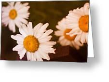 Hidden Treasure Greeting Card