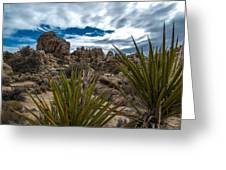 Hidden Valley Yuccas Greeting Card