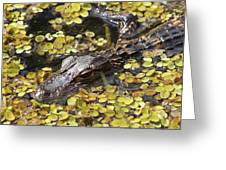 Hiding Alligator Greeting Card