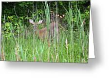 Hiding Deer Greeting Card