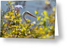 Hiding Egret Greeting Card