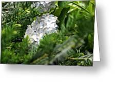 Hiding Hydrangea Greeting Card