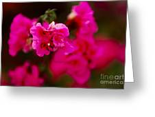 Hiding In Pink Greeting Card