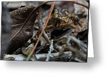 Hiding In The Leaf Litter Greeting Card