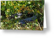 Hiding In The Marsh Greeting Card