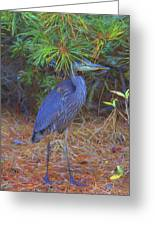 Hiding In The Pine Needles Greeting Card