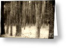 Hiding In The Trees By Diana Sainz Greeting Card
