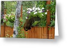 Hiding Moose Greeting Card