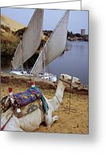 High Angle View Of A Camel Resting Greeting Card