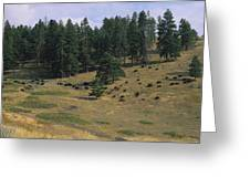 High Angle View Of Bisons Grazing Greeting Card