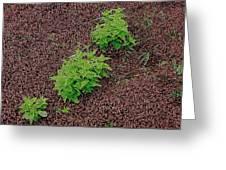 High Contrast Plantlife Greeting Card