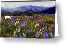 High Country Lupine Dreams Greeting Card