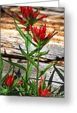High Country Wildflowers Greeting Card