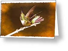 High Definition Hummer Greeting Card
