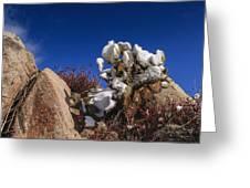 High Desert Snow 2 Greeting Card