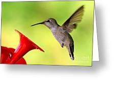 High Flying Hummingbird Greeting Card