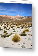 High In The Chilean Altiplano Greeting Card