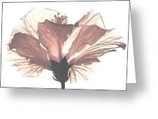 High Key Hibiscus Greeting Card