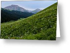 High Meadow  Greeting Card