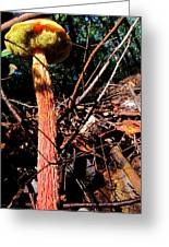 High Rise Fungi Greeting Card