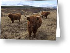 Highland Cattle Gang Greeting Card