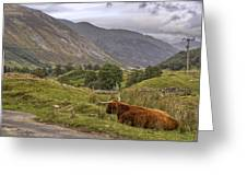 Highland Cow In Scotland Greeting Card