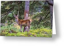 Highland Stag Greeting Card