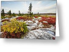 Highlands Of West Virginias Dolly Sods Greeting Card