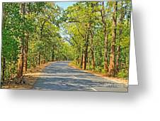 Highway In The Forest Greeting Card